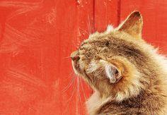 Cat on Red fine art print by GrayTabbyCat on Etsy, $12.00