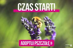 Greenpeace Polska (@Greenpeace_PL) | Twitter Bee, Twitter, Movies, Movie Posters, Animals, Animales, Film Poster, Animaux, Films
