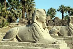Sphinx statues at the Avenue of Shpinxes, Luxor, Egypt