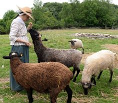 Love our sheep! Genesee Country Village & Museum Ruby Foote Photography