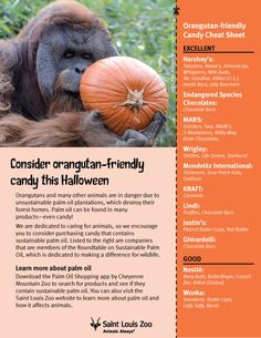Protect orangutans by purchasing candy that uses sustainable palm oil! Use this orangutan-friendly sustainable palm oil Halloween candy list.