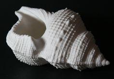 #triton #sea #lunaporcelain #lunadelmar #ocean #porcelain #nature #blackandwhite #shell #luna Porcelain