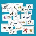 Recursos para el aula: Fichas de infantil de Animales marinos