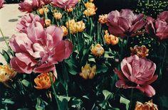 In Bloom,