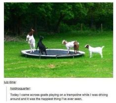 I have actually heard people suggest trampolines for goats. Keeps them from getting bored (Yes, Goat Boredom is a thing.. A BAD thing, - Especially for fences...) ~A