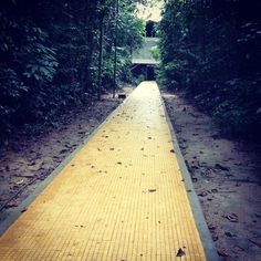 UFAM - Universidade Federal do Amazonas en Manaus, AM