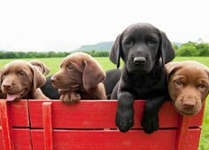 Too Cute!  Puppies on Animal Planet