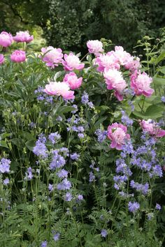 An English Inspired Design Have you ever really thought about how many people see the outside of your home? Peonies And Hydrangeas, Peonies Garden, Small Natural Garden Ideas, Beautiful Gardens, Beautiful Flowers, Flower Garden Images, English Garden Design, Italian Garden, Garden Posts