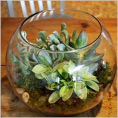 Terrarium making workshop at the Smithsonian on July 20th from 1-4 p.m. Sign up here! // sarah von pollaro