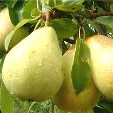 Planting Fruit Trees -Planting fruit trees is very important and picking the right place is most important because once the fruit tree is planted you don't want to move it.  -Posted on February 1, 2014