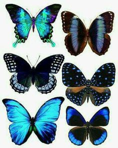 PAPILLONS A IMPRIMER – Le Scrap de Sandrine VACHON Butterfly tattoo ideas, I love the two in the middle. My sister and I were supposed to get matching butterfly tattoos years ago. Blue Butterfly, Butterfly Wings, Butterfly Tattoos, Butterfly Artwork, Butterfly Watercolor, Henna Butterfly, Butterfly Outline, Butterfly Frame, Vintage Butterfly