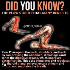 Yoga Moves, Stretching Exercises, Daily Stretches, Health Facts, Health Tips, Yoga Fitness, Health Fitness, Yoga For Beginners, Beginner Yoga