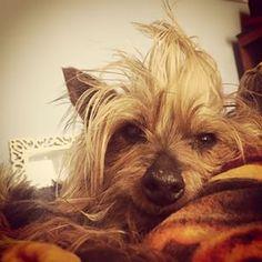 Dieser Hund | 22 Tiere, die einen fieseren Bad Hair Day haben als Du