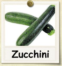 how to:  organic zucchini. gah i love zucchini! can't wait to grow a zillion zucchini plants this year!