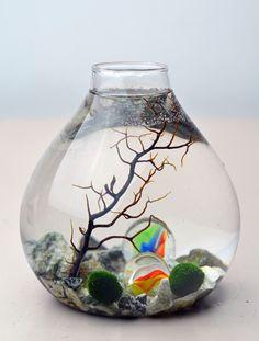 Marimo+Aquatic+Terrarium++Japanese+Moss+Ball++by+PinkSerissa,+$26.00