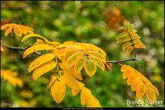 Herbst rund um die Hinkeldeybrücke (Okt 2016) #Berlin #Deutschland #Germany #biancabuergerphotography #igersgermany #igersberlin #IG_Deutschland #IG_berlincity #ig_germany #shootcamp #shootcamp_ig #pickmotion #berlinbreeze #diewocheaufinstagram #berlingram #visit_berlin #Herbst #autumn #canon #canondeutschland #EOS5DMarkIII #5Diii #gelb #yellow #Natur #nature