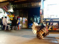 Bangkok: mon Amour!