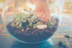 conseils pour la réalisation et l'entretien d'un terrarium de succulentes