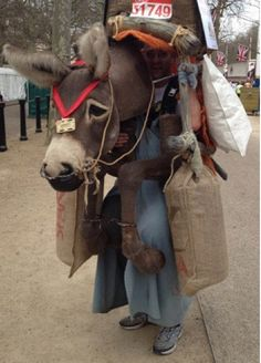 A fuckin' Donkey. Cosplay Fail, Donkey Costume, Dukes Of Hazard, Running Costumes, Usain Bolt, I Hate You, Diy Costumes, Charity, Scene