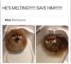 Latest dog pictures compilation of the day. Check these 46 funny dog pictures dump of the day that will make you LOL every time. Funny Dog Captions, Funny Animals With Captions, Funny Cat Compilation, Funny Dog Memes, Funny Animal Memes, Funny Cat Videos, Funny Animal Pictures, Cute Funny Animals, Cute Baby Animals