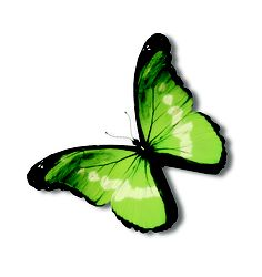 Green butterfly inspiration from the CORT Signature Collection 2013
