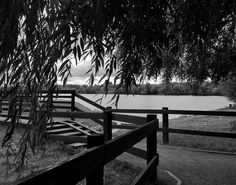 Did you hear it? It is wind's song in the leaves of trees.  〰〰〰〰〰〰  #lake #trees #summer #willow #monochrome #blackandwhite #bw