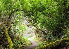 Redwood Forest: We have never felt more magical curiosities than when we were here.