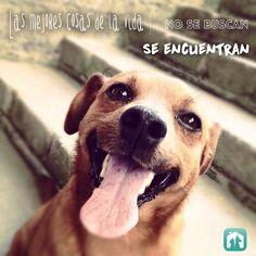 Adoptar mascotas, perros en adopción, Whapets App, mascotas perdidas, adopción cachorros, adoptar mascotas