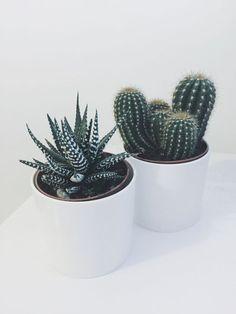 Ideias irresistíveis para usar cactos na decoração