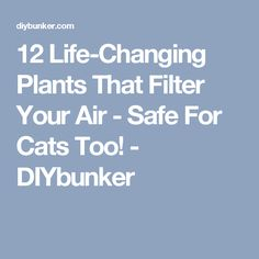 12 Life-Changing Plants That Filter Your Air - Safe For Cats Too! - DIYbunker