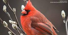 Tweets con contenido multimedia de Audubon Society (@audubonsociety) | Twitter