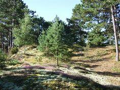 Fuglevej 33, 8592 Anholt - Stor enestående smuk, ugeneret, kuperet naturgrund med sommerhus.  #anholt #fritidsgrund #selvsalg #grundsalg