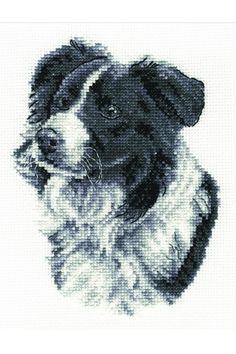 Cross stitch kit - border collie - Cross stitch kits - DMC