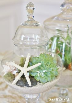 Shells and Succulents - easy succulent gardening, perfect for brown thumbs.