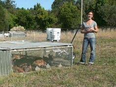 Chicken Tractors at Silva Star Farms - YouTube