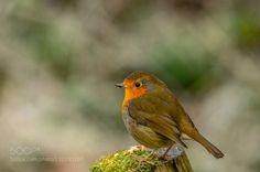 Robin.jpg #PatrickBorgenMD