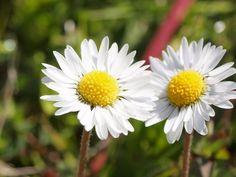 Make Me Smile, Flora, Plants, Garden, Flower Photos, Roses, Italia, Plant, Planets