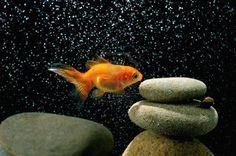 Pesci in acquario: come assicurarsi che l'acqua sia pulita