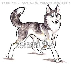 Trotting Husky Dog Commission by WildSpiritWolf on deviantART Husky Drawing, Manga Drawing, Anime Wolf, Anime Manga, Cartoon Wolf, Wolf Character, Wolf Sketch, Fairy Drawings, Nature Sketch