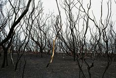 A trip to Wye River after the bushfires, Victoria - purple TRAVEL