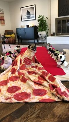 Doug The Pug, Pugs, Cute Animals, Watch, Videos, Dogs, Children, Clock, Cutest Animals