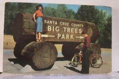 California-CA-Santa-Cruz-Big-Trees-Park-Postcard-Old-Vintage-Card-View-Standard