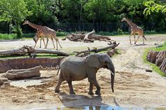 Zoos in the United States Get Permits to House Elephants from Africa - The Dallas Zoo, the Sedgwick County Zoo in Wichita, KS and the Henry Doorly Zoo in Omaha, NE together will house as many as 18 elephants. http://thescoopblog.dallasnews.com/2016/01/dallas-zoo-gets-permit-to-house-elephants-facing-drought-conditions-in-africa.html/