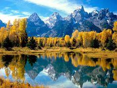 Wyoming, il foliage avvolge il Grand Teton NP (autunno) - Avvistamenti: bisonte e alce