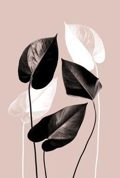 Black White Art, Pink Black, Plant Art, Basic Colors, Mid Century, Leaves, Salad, Art Prints, Iphone