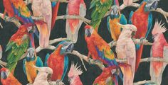 Parrots (823608) - Albany Wallpapers - A raised textured vinyl wallcovering featuring multi-coloured Parrot Macaw birds on branches with gold glitter effects. Showing on a black background. Please request a sample for true colour match.
