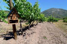 Le domaine vico respecte son environnement et son terroir