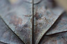 Autumn Macro Signed Print, Autumn Leaf Photo, Autumn or Winter Decor, Gray and Brown Woodland Decor, Color Fine Art Photography Wall Print