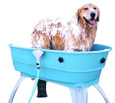 12 best grooming trailer ideas images on pinterest dog grooming bathing your dog how you bath your dog is more solutioingenieria Gallery
