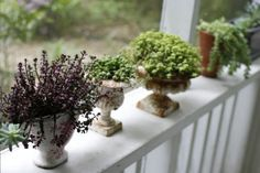 Potted succulents. From left: `Red Carpet' sedum, string-of-pearls senecio, `Ogon' sedum and burro's tail sedum.